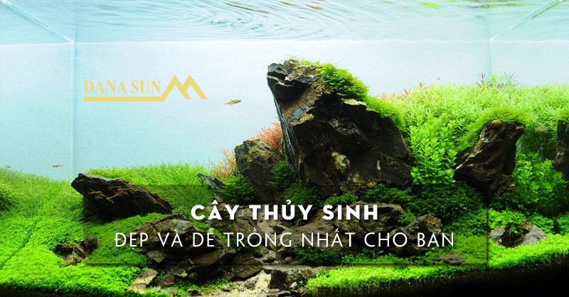 cay-thuy-sinh